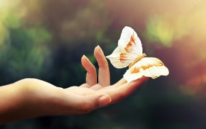 White-butterfly-in-hand